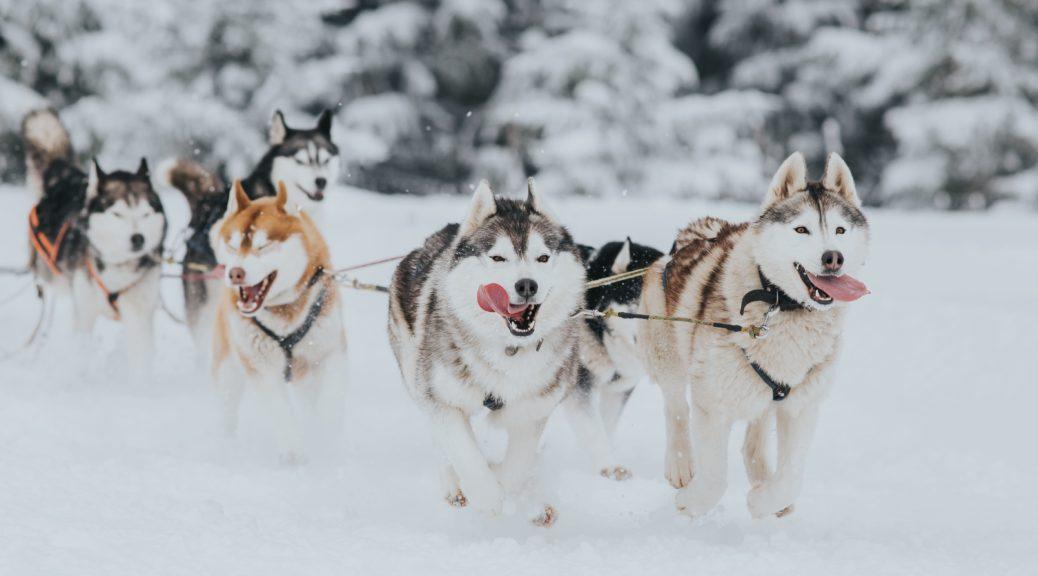 5 activités d'hiver incontournables autour d'Annecy