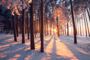 Top 4 des activités hivernales à pratiquer au domaine nordique des Glières